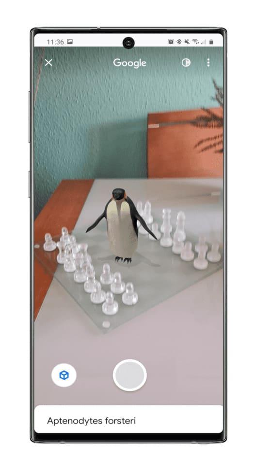 Google-aniamal-pinguino-realidad-aumenatda-ver-espacio