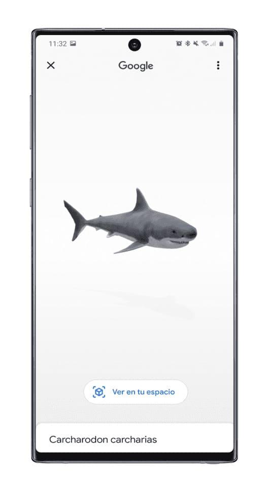 dimensiones-animales-AR-grande