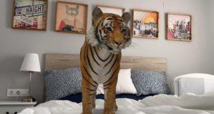 smartphone-tigre-3d-google