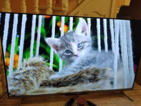 TCL-55C715-television-qled-barata-lindo-gatito